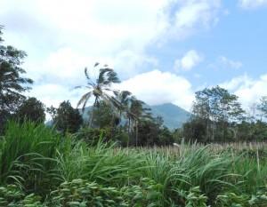 Tanah di Tabanan dijual 54 Are View Gunung di Tabanan