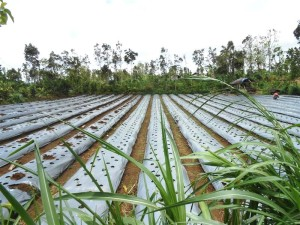 Tanah dijual di Tabanan 1000 m2 di Tabanan