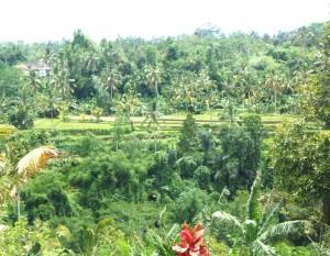Jual tanah di Tabanan Bali 14.500 m2 di Tabanan