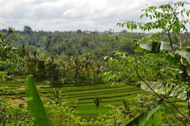 Jual properti di tanah Tabanan