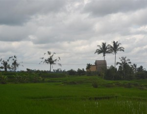 Jual tanah di Tabanan 3.500 m2 View sawah dan Gunung  di Tabanan