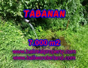 DIJUAL TANAH MURAH DI TABANAN TJTB089 – KESEMPATAN INVESTASI PROPERTY DI BALI