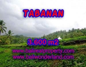 TANAH DI TABANAN MURAH DIJUAL TJTB117 – KESEMPATAN INVESTASI PROPERTY DI BALI