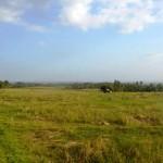 Jual Tanah Murah di Tabanan Bali TJTB1430101