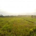 Jual Tanah Murah di Tabanan Bali TJTB1430102