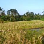 Jual Tanah Murah di Tabanan Bali TJTB1430103