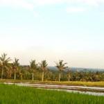 Jual Tanah Murah di Tabanan Bali TJTB1430104