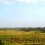 Jual Tanah Murah di Tabanan Bali TJTB1430105