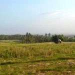 Jual Tanah Murah di Tabanan Bali TJTB1430106