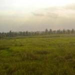 Jual Tanah Murah di Tabanan Bali TJTB1430108