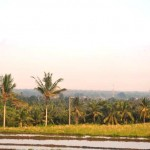 Jual Tanah Murah di Tabanan Bali TJTB1430109