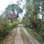 Jual Tanah Murah di Tabanan Bali TJTB1430111