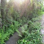 Jual Tanah Murah di Tabanan Bali TJTB1430114