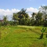 TJTB144 - DIJUAL TANAH DI TABANAN - LAND FOR SALE IN TABANAN BALI 2