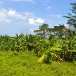 TJTB144 - DIJUAL TANAH DI TABANAN - LAND FOR SALE IN TABANAN BALI 3