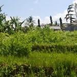TJTB144 - DIJUAL TANAH DI TABANAN - LAND FOR SALE IN TABANAN BALI 7