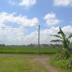 TJTB145 - TANAH DI TABANAN DIJUAL MURAH - LAND FOR SALE IN TABANAN BALI 05
