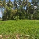TJTB145 - TANAH DI TABANAN DIJUAL MURAH - LAND FOR SALE IN TABANAN BALI 07