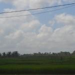 TJTB145 - TANAH DI TABANAN DIJUAL MURAH - LAND FOR SALE IN TABANAN BALI 10
