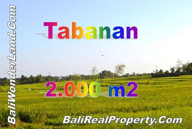 TJTB147 - 1 - TANAH DI TABANAN DIJUAL MURAH - LAND FOR SALE IN TABANAN BALI 01