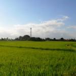 TJTB147 - TANAH DI TABANAN DIJUAL MURAH - LAND FOR SALE IN TABANAN BALI 02
