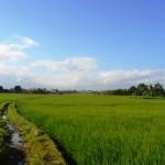 TJTB147 - TANAH DI TABANAN DIJUAL MURAH - LAND FOR SALE IN TABANAN BALI 03