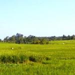 TJTB147 - TANAH DI TABANAN DIJUAL MURAH - LAND FOR SALE IN TABANAN BALI 07