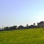 TJTB147 - TANAH DI TABANAN DIJUAL MURAH - LAND FOR SALE IN TABANAN BALI 09