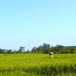 TJTB147 - TANAH DI TABANAN DIJUAL MURAH - LAND FOR SALE IN TABANAN BALI 10