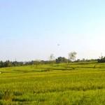 TJTB147 - TANAH DI TABANAN DIJUAL MURAH - LAND FOR SALE IN TABANAN BALI 11