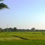 TJTB148 - TANAH DI TABANAN DIJUAL MURAH - LAND FOR SALE IN TABANAN BALI 03