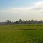 TJTB148 - TANAH DI TABANAN DIJUAL MURAH - LAND FOR SALE IN TABANAN BALI 04