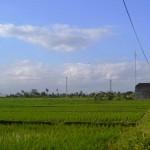 TJTB148 - TANAH DI TABANAN DIJUAL MURAH - LAND FOR SALE IN TABANAN BALI 09