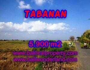 MURAH ! TANAH DI TABANAN BALI TJTB131 – INVESTASI PROPERTY DI BALI