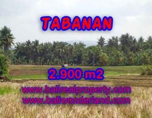 JUAL TANAH DI TABANAN BALI TJTB136 – PELUANG INVESTASI PROPERTY DI BALI