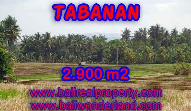 JUAL TANAH DI TABANAN BALI TJTB136 - PELUANG INVESTASI PROPERTY DI BALI