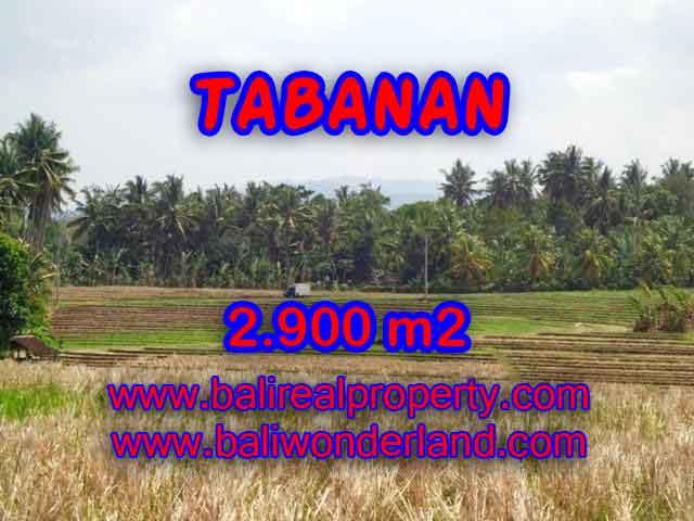 TANAH MURAH DI TABANAN BALI DIJUAL TJTB136 - INVESTASI PROPERTY DI BALI