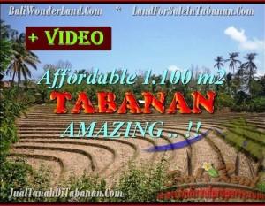 JUAL TANAH di TABANAN BALI 11 Are View kebun dan sawah