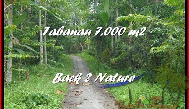 INVESTASI PROPERTY, DIJUAL TANAH MURAH di TABANAN TJTB176
