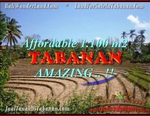 TANAH DIJUAL MURAH di TABANAN BALI 11 Are di Tabanan Selemadeg