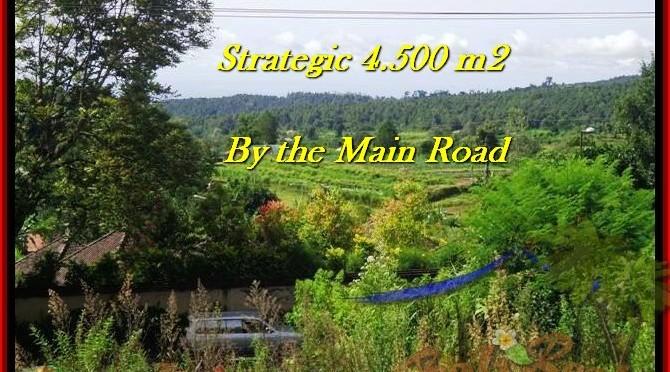 JUAL TANAH MURAH di TABANAN BALI 45 Are view Gunung, sawah, hutan dan kota denpasar