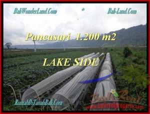TANAH MURAH di TABANAN BALI 1.200 m2  View Danau Buyan dan Gunung