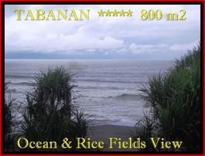 TANAH di TABANAN JUAL 800 m2  View laut, sawah dan gunung