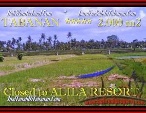 TANAH JUAL MURAH  TABANAN BALI 2.000 m2  view sawah dan Gunung