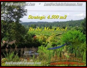 JUAL TANAH MURAH di TABANAN BALI 4,500 m2  view Gunung, sawah, hutan dan kota denpasar