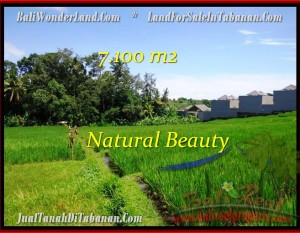 TANAH di TABANAN BALI DIJUAL MURAH 71 Are View sawah dan Sungai