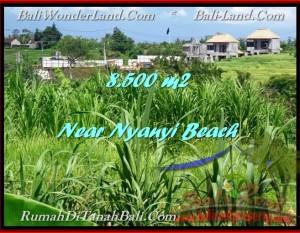 JUAL TANAH MURAH di TABANAN BALI 8,500 m2  View sawah dan Sungai