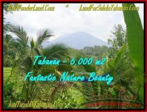TANAH DIJUAL MURAH di TABANAN BALI 6.000 m2 di Tabanan Penebel