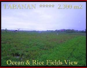 TANAH MURAH di TABANAN BALI 2.300 m2  View laut, sawah dan gunung