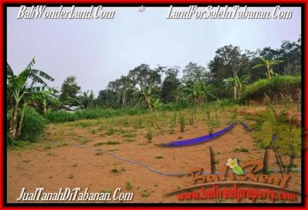 JUAL TANAH MURAH di TABANAN 127 Are View kebun dan gunung